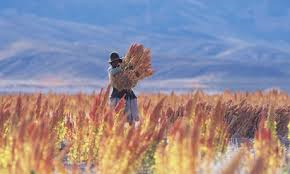 Truth-about-human-food_280117